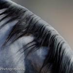 Summerwind_Marchador_horse_19