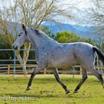 Summerwind_Marchador_horse_2079