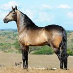 Bronze de Rio Grande