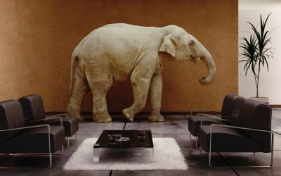 Can You See the Elephant in the Room?