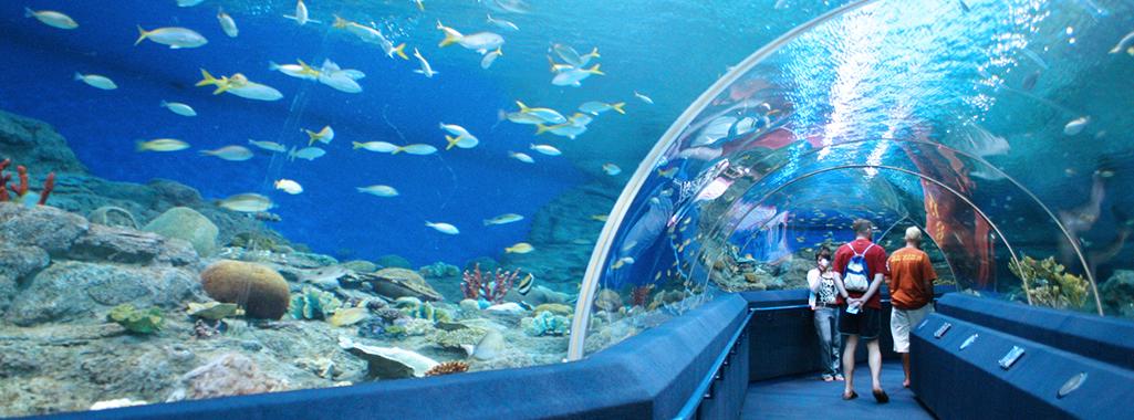 Under water world Pattaya