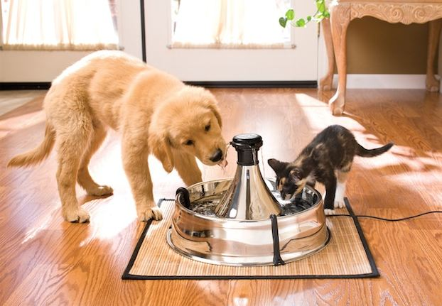 Pet water fountain: Drinkwell 360 Pet Fountain (Stainless Steel)