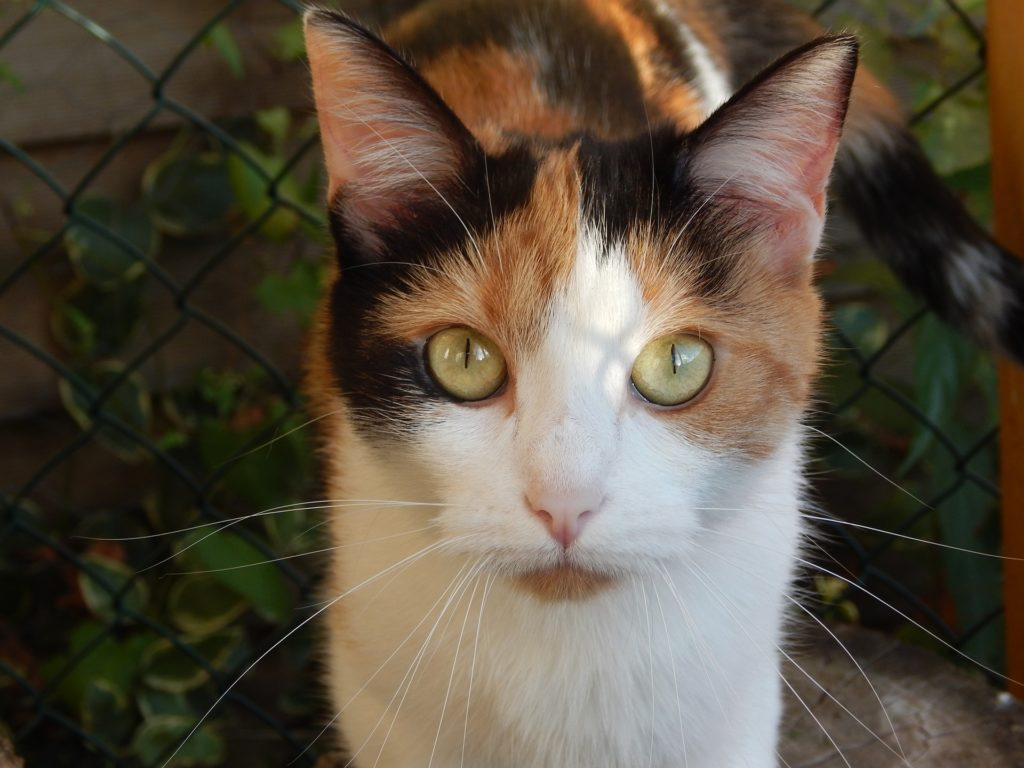 Regaling Is Hyperthyroidism Cats Painful What Is Irritable Bowel Syndrome Er Cats Ibs Cats Prednisone Ibs houzz-02 Ibs In Cats