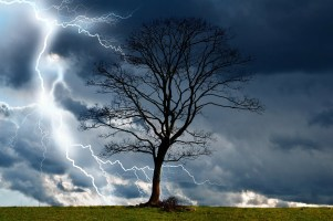 tree-164025_1280
