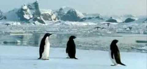 Imagina… si los pinguinos volaran!!!