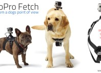 The GoPro Fetch camera mount for dogs