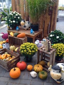 Herbst_in Ihrer_Gärtnerei_herbstliches_Erwitte_Gaertnerei_Enge_September_Oktober_2017_Dekoration_Herbstpflanzen_6
