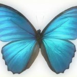 Cause of Mysterious Butterfly-Shaped Radar Blob Found