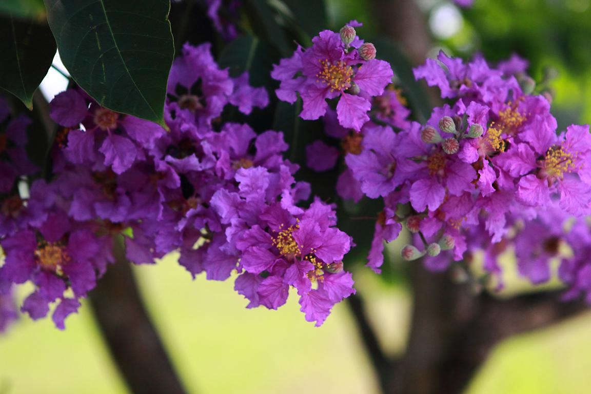 Sleek Galen Garwood Print Making Collage Trees Purple Flowers Green Leaves Trees Purple Flowers Norrn California houzz-03 Trees With Purple Flowers
