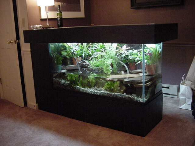 jpeg turtle aquarium http my pet care com pets turtle turtle aq html