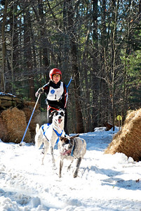 Skijoring