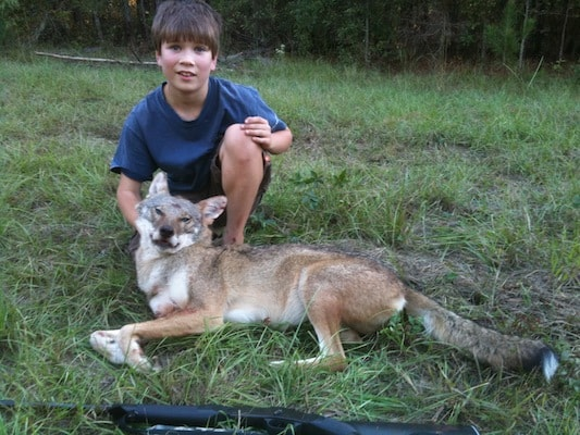 How do you think the problem of deer over population should be handled?