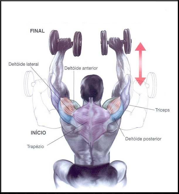 exercícios-de-Força-e-Hipertrofia