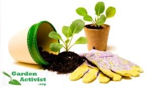 garden health 2
