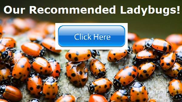 Ladybugs! Natural Pest Control