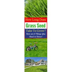 Small Crop Of Fast Growing Grass Seed