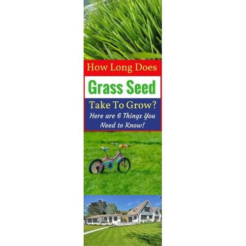 Medium Crop Of Fast Growing Grass Seed