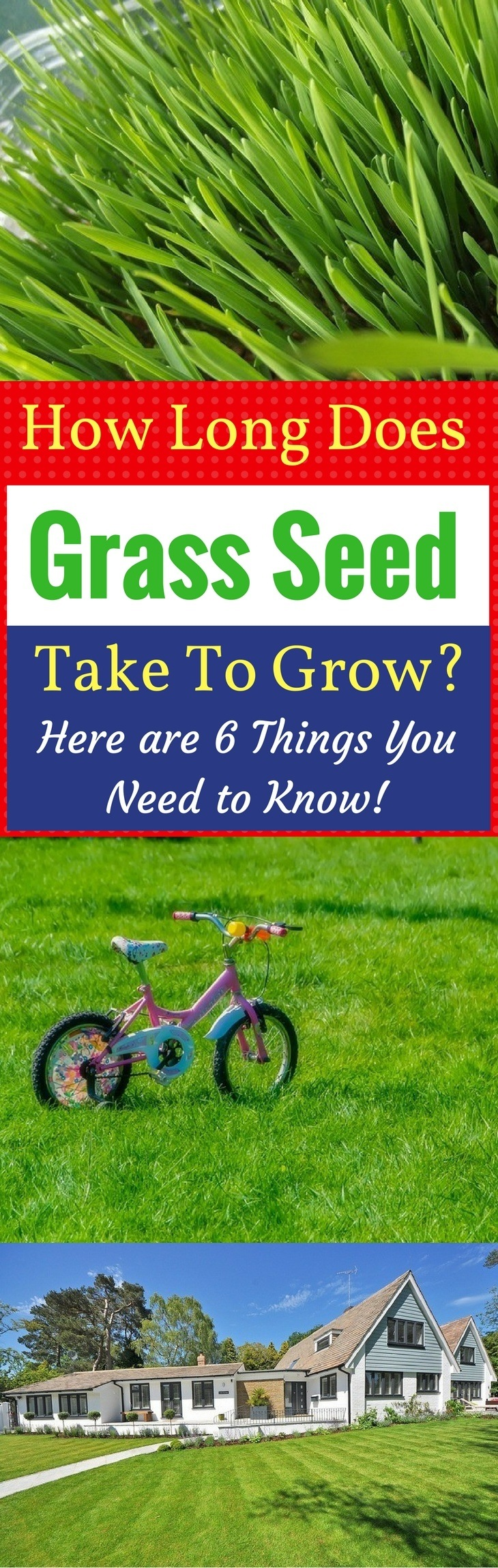 Large Of Fast Growing Grass Seed