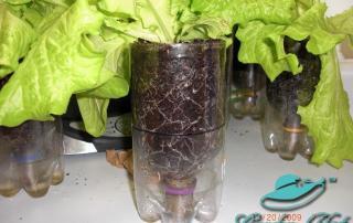 Roots of a Pop Bottle SIP - Garden Hat