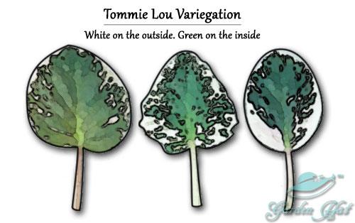 Garden Hat - African Violet Leaf Types - Tommie Lou Variegation