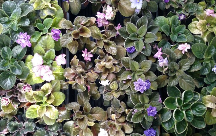 Image result for  african violet set up