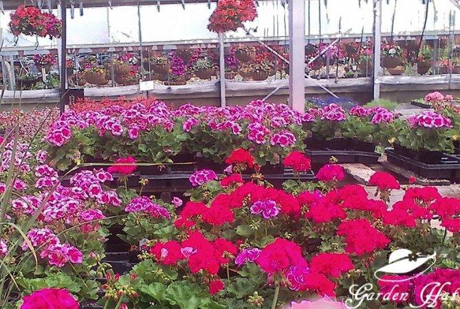 Garden Hat Adventures - Burlington Greenhouse Crazy Good Colors