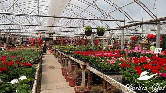 Garden Hat Adventures - Burlington Greenhouse Inside