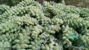Garden_Hat_Garden_Adventures_Mitchell_Park_Desert_Dome_6