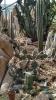 Garden_Hat_Garden_Adventures_Mitchell_Park_Desert_Dome_9_20