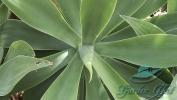 Garden_Hat_Garden_Adventures_Mitchell_Park_Desert_Dome_7