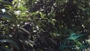 Garden_Hat_Garden_Adventures_Mitchell_Park_Show_Dome_2