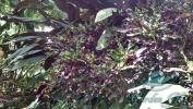 Garden_Hat_Garden_Adventures_Mitchell_Park_9_34