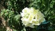 Garden_Hat_Garden_Adventures_Mitchell_Park_Show_Dome_1