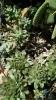 Garden_Hat_Garden_Adventures_Mitchell_Park_Desert_Dome_9_11