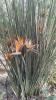 Garden_Hat_Garden_Adventures_Mitchell_Park_Desert_Dome_9_21