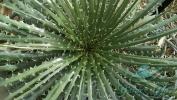 Garden_Hat_Garden_Adventures_Mitchell_Park_Desert_Dome_9