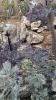 Garden_Hat_Garden_Adventures_Mitchell_Park_Desert_Dome_9_16