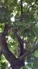 Garden_Hat_Garden_Adventures_Mitchell_Park_8