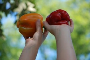 organic gardening main page