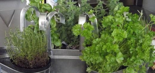 herbs-167725_960_720