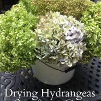 Drying Hydrangea - Ever Lasting Decor