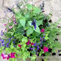 Favorite Annual Flowers for Container Gardening
