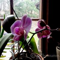 Growing and Repotting Orchids