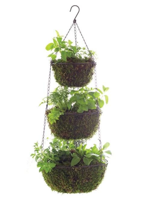 Medium Of Hanging Herb Garden