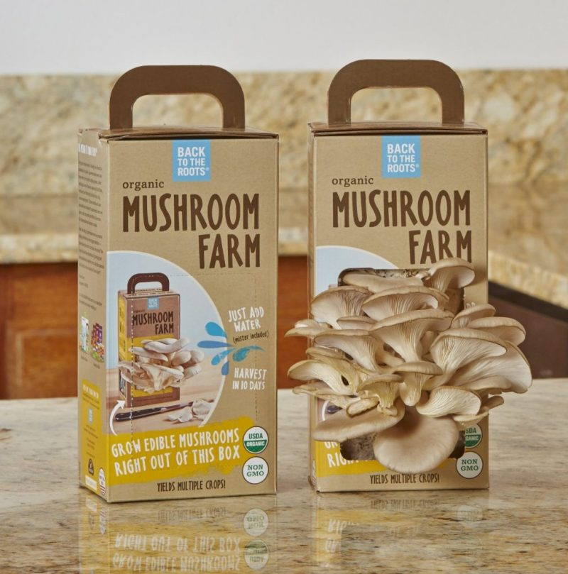 Decent Dad Gift Ideas More Gift Ideas Ly Gifts Mushroom Kits Gardeners Nature Lovers Garden Rapy Gift Ideas Girlfriend