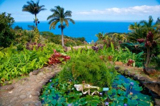 Tropical Hawaiian garden