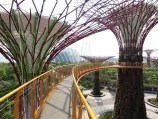 Supertree-walkway-22m-high