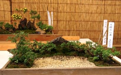 Bonsai and minature display, Tokyo