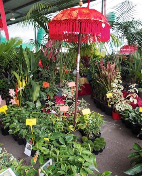 Qld Garden Expo.