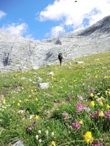 Field of wildflowers in the Dolomites. Photo Helen McKerral